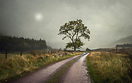 Distant house in a rural setting with mist and lane