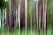 Nederland, Maastricht, 10-6-2012Door lange sluitertijd en bewogen camera abstracte bomen, bos.Foto: Flip Franssen/Hollandse Hoogte