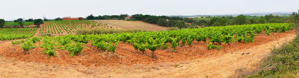 Prieure de St Jean de Bebian. Pezenas region. Languedoc. Villafranchien soil, calcareous rock, typical of the area, fromed as the old river bed of the Herault river. The vineyard that has been planted with all 13 of the Chateauneuf-du-Pape grape varieties. France. Europe. Vineyard. Calcareous limestone.