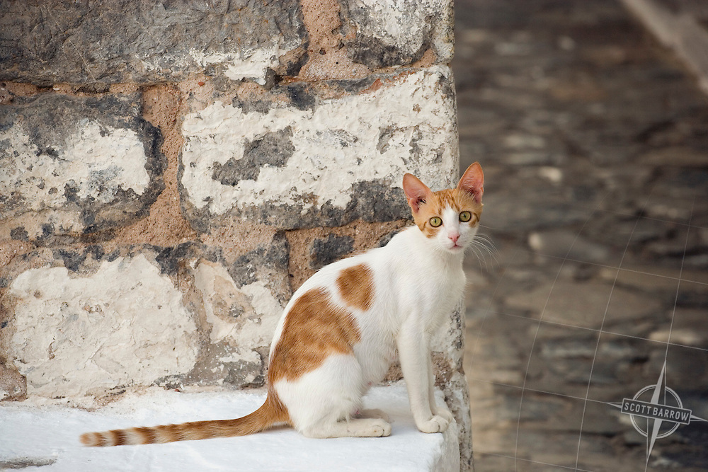 Cat on a stone wall on Hydra, Greece.