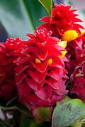 Ginger, Hawaii, Hilo Market, Island of Hawaii