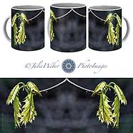 Coffee Mug Showcase 54  - Shop here: https://2-julie-weber.pixels.com/products/bent-on-growing-julie-weber-coffee-mug.html