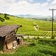 A landscape of Swiss vineyards near the towns of Eggingen and Hallau, Switzerland.