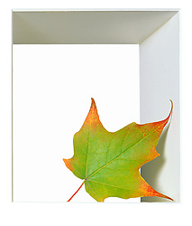 fall or Autumn leaf in white box frame