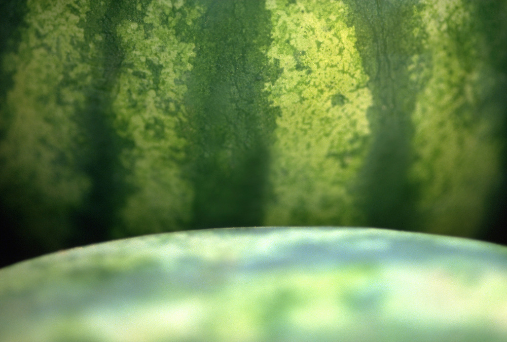 Extreme close up selective focus photograph of a couple Jubilee watermelons