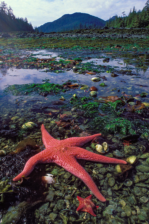 Tidepool, Haida Gwaii, Britisih Columbia, Canada