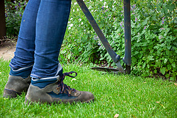 Trimming the lawn edges with long handled edging shears