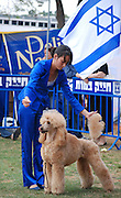 Israel, Tel Aviv, The International Dog Show 2010 Peach Standard Poodle