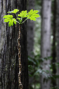 A lonely branch along the riverside near Mount Robson, on the edge of the Canadian Rockies