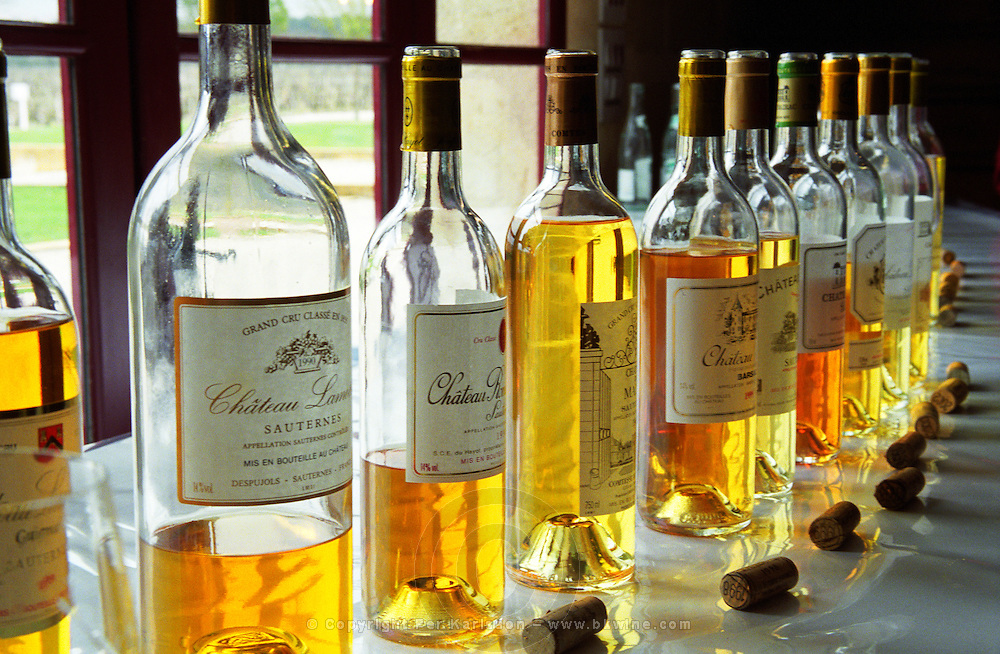"""A selection of different sauternes wines at a Union des Grand Crus tasting at the """"primeurs"""" release in Bordeaux. Lineup of bottles with golden amber yellow colour and corks on a white table, backlight backlit back light lit. Tasting held at Domaine de Chevalier in Graves, Pessac-Leognan. Bordeaux Gironde Aquitaine France Europe"""