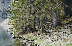 THEMENBILD - ein Waldabschnitt am Ufer des Hintersee, aufgenommen am 25. April 2020 in Mittersill, Oesterreich // a forest section on the shore of the Hintersee, in Mittersill, Austria on 2020/04/25. EXPA Pictures © 2020, PhotoCredit: EXPA/Stefanie Oberhauser