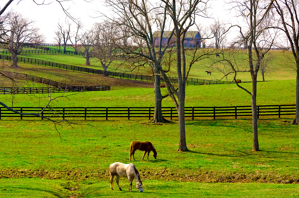 Horse farms along Old Frankfort Pike, Lexington, Kentucky USA