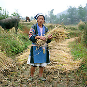 """Portrait of a Small Flower Miao ethnic minority woman, wearing her traditional clothing, harvesting rice, Gao Yuan village, Guizhou, China. Almost 35% of Guizhou's population is made up of over 18 different ethnic minorities including the Miao. Each Miao group became isolated in these mountainous regions, hence the present day diversity in their culture, costume and dialects. According to a popular saying, """"if you meet 100 Miaos, you will see 100 costumes."""""""