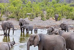 Elephants in waterhole at Etosha National Park, Namibia, Africa