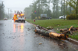 A tree lays on the road as a result of hurricane Dorian pounding the Atlantic Provinces with heavy rain and winds in Dieppe, N.B. on Saturday September 7, 2019, Canada. Photo by Marc Grandmaison/CP/ABACAPRESS.COM