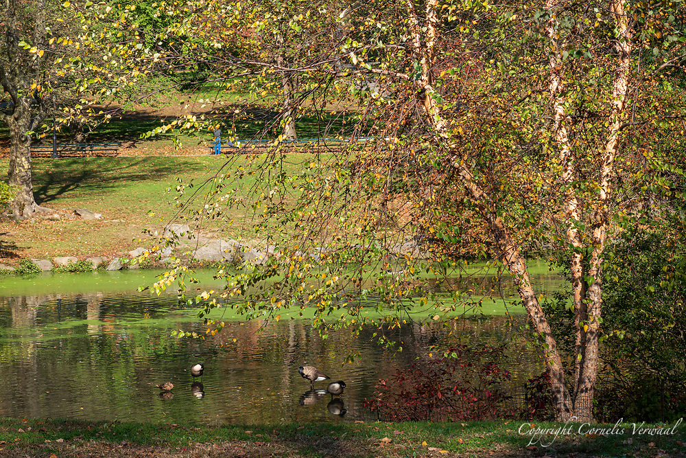 Autumn colors at The Pool in Central Park