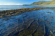 Oceania, Australia; Australian; Tasmania; Eaglehawk Neck; Tessellated Pavement;