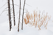 Winter photographs from the Winter in Yellowstone Photo Tour