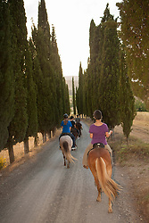 Europe, Italy, Tuscany, Volterra, people horseback riding on Icelandic Ponies through tall trees