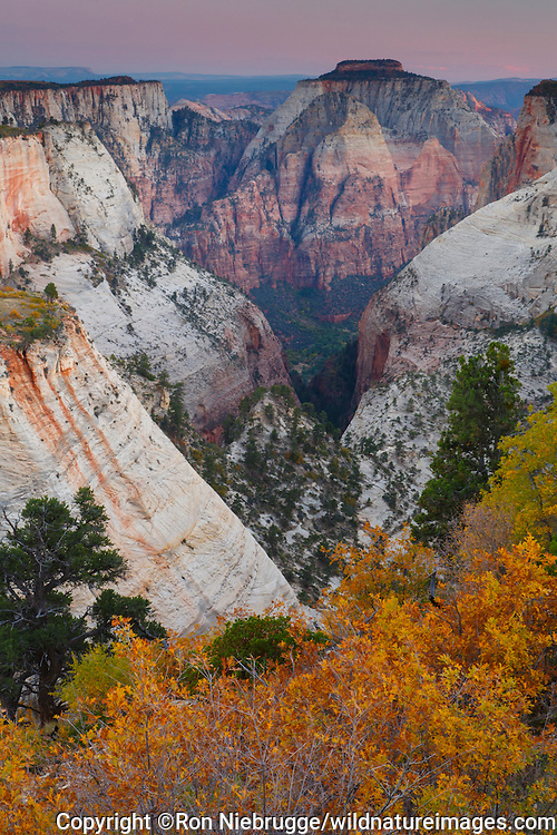 Behunin Canyon from the West Rim Trail, Zion National Park, Utah.