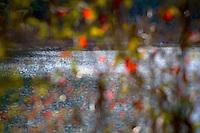 Pond through through autumn leaves..