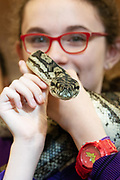 12/11/2018 Repro free: Galway Science and Technology Festival, the largest science event in Ireland, runs from 11-25 November featuring exciting talks, workshops and special events. Full programme at GalwayScience.ie. <br /> <br /> Python from The Bug Doctors collection ( Dr Michel Dugon- NUI Galway) with Caitlin Sills from Our Lady's College Galway    . Photo:Andrew Downes, Xposure.