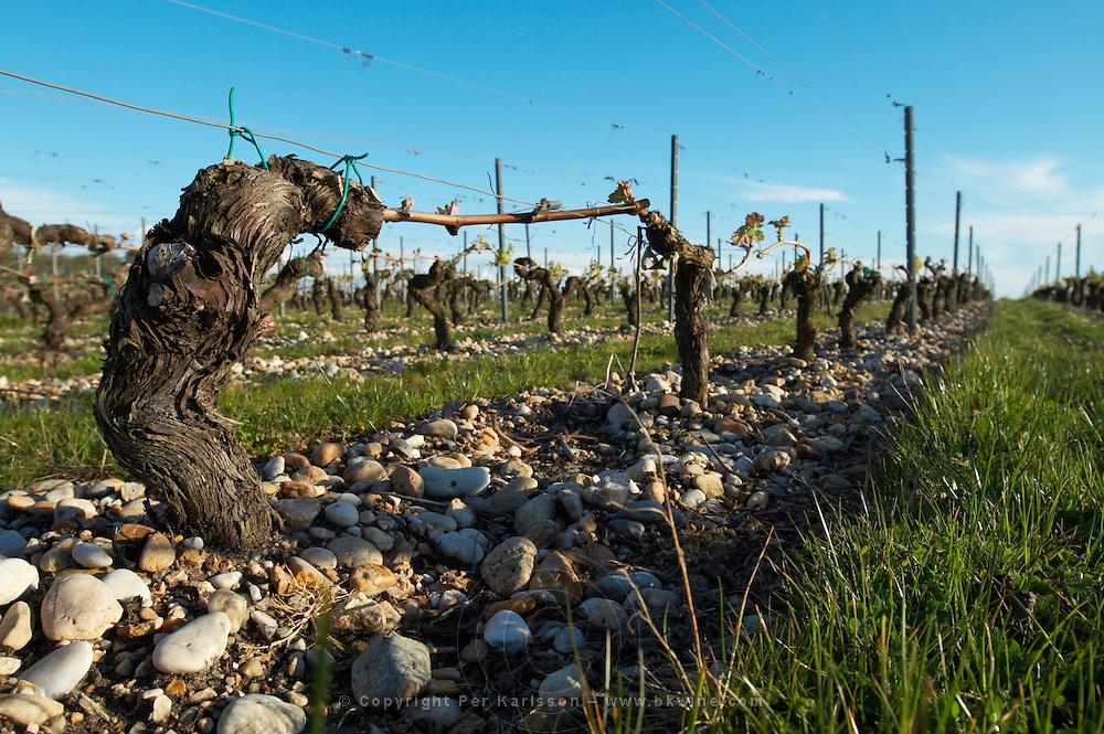 gravelly soil old vine chateau belgrave haut medoc bordeaux france