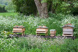 Cow parsley and beehives at Hidcote Manor Garden