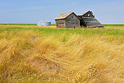 Wooden graneries contrasted with new metal ones<br /> Taber<br /> Alberta<br /> Canada