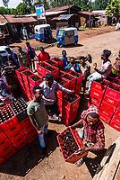 A delivery of Dashen Beer, West Gojjam, Amhara region, Ethiopia.
