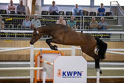006, Marline<br /> Nationaal Kampioenschap KWPN<br /> 3 jarige springmerries<br /> © Hippo Foto - Dirk Caremans<br />  15/08/2020