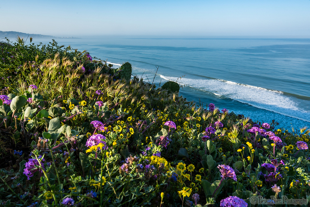 Torrey Pines SR 03-25-2019_1501<br /> <br /> Torrey Pines State Reserve<br /> © 2019, California State Parks.<br /> Photo by Brian Baer
