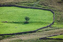 Green, stone-walled field in Sheeffrey Hills, County Mayo, Ireland