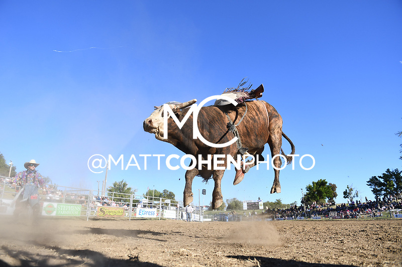 Kyle Eaton / 41 Reinmaker of Flying U, Marysville 2018<br /> <br /> <br /> UNEDITED LOW-RES PREVIEW<br /> <br /> <br /> File shown may be an unedited low resolution version used as a proof only. All prints are 100% guaranteed for quality. Sizes 8x10+ come with a version for personal social media. I am currently not selling downloads for commercial/brand use.