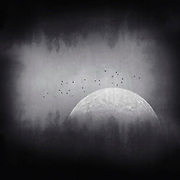 Moon over  a misty forest - photo composite in black and white<br /> Redbubble --> http://bit.ly/Black_Box_Moon