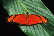 Buttterfly<br />
