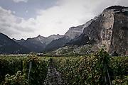 Vineyard in Switzerland