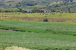 Pampa Gaúcho, lavoura de soja. FOTO: Marcos Nagelstein/Agência Preview