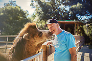 Senior adult man smiling with camel