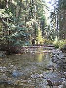 Creek in the Deep Woods