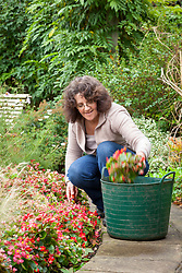 Pulling up bedding plants that have finished flowering. Begonias.