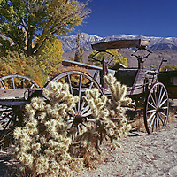 An old wagon & cholla cactus below the White Mountains.