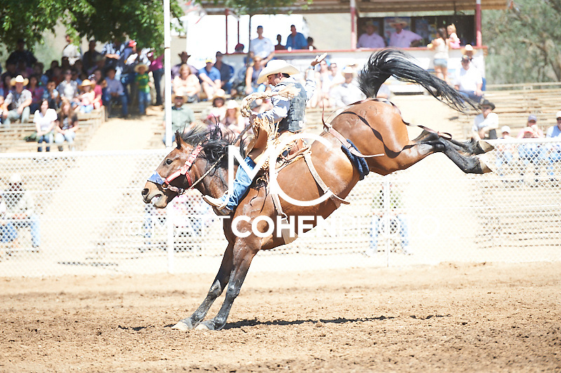 Saddle bronc rider Tyler Baeza of Mesquite, NV rides Cheer Up at the Woodlake Lions Rodeo.<br /> <br /> <br /> UNEDITED LOW-RES PREVIEW<br /> <br /> <br /> File shown may be an unedited low resolution version used as a proof only. All prints are 100% guaranteed for quality. Sizes 8x10+ come with a version for personal social media. I am currently not selling downloads for commercial/brand use.