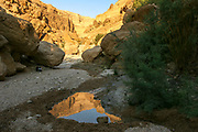 Israel, Judean Desert, Desert Oasis in Wadi Bokek