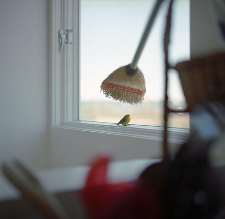 Bird in the Room, Biddeford Pool, Maine, 2005