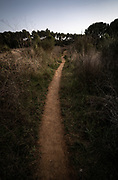 Path through rough bushes in witer, Catalonia, Spain