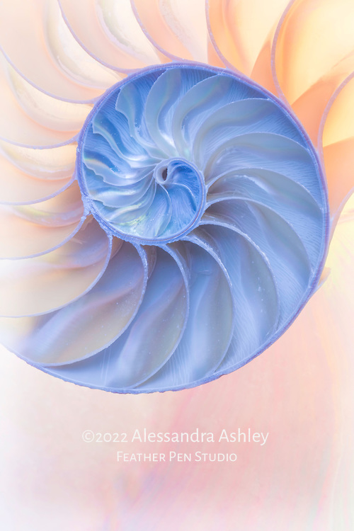 Macro view into pearlescent chambers and spiral of nautilus shell.