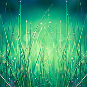 close-up of dew drops in fresh grass<br /> <br /> Prints & more:<br /> http://society6.com/DirkWuestenhagenImagery/light-water-and-grass_Print