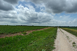 Midwestern scenic of crops growing in the fields creating a panoramic horizon with a gravel road slithering between the plots.<br /> <br /> <br /> HDR - High Dynamic Range processing applied