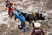 Payton Guion is flipped unceremoniously off In Justice for no time during opening night of the Jackson Hole Rodeo at the Teton County Fairgrounds in Jackson, Wyoming on Saturday, May 25, 2019. (Rebecca Noble/Jackson Hole News&Guide)